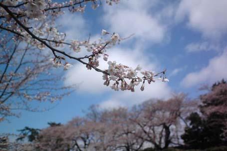 sakeo_050802_DSC_6375.jpg