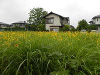 sakeo0603_19_3390.jpg