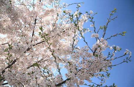 sakao_04211.jpg
